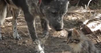 Amistad entre un perro y un gatito