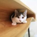 CATable, mesa para gatos