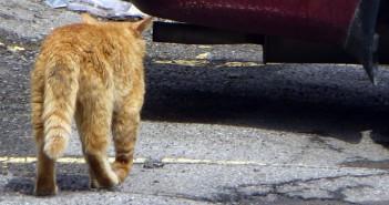 Un gato y un coche