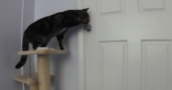 Un gato abriendo una puerta