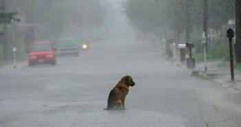 Perro bajo la lluvia