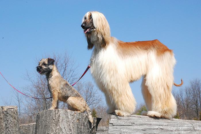 Perro pequeño y perro grande juntos