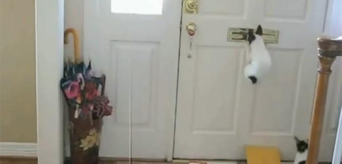 Perros carteros