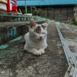 Tashiro-jima, isla de los gatos