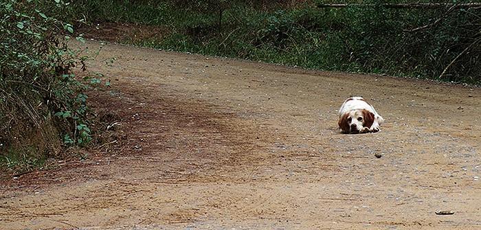 Mascota abandonada