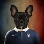 Francia: Bulldog francés