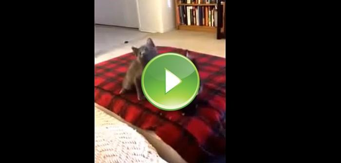 Gatitos bailando hip-hop