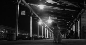 Perro esperando en la estación de tren