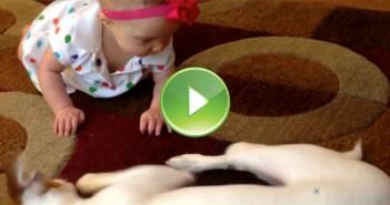 Perro gateando con bebé