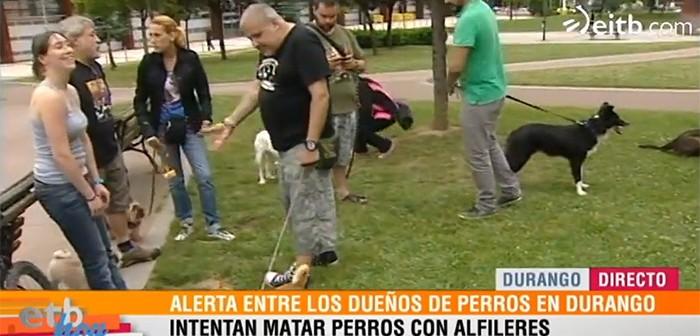 Perros en Durango (Bizkaia)