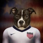 Estados Unidos: American Staffordshire Terrier