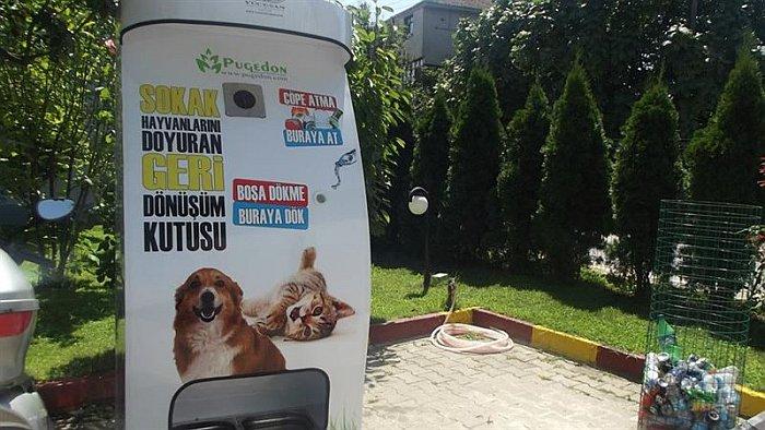 Alimento para perros y gatos callejeros