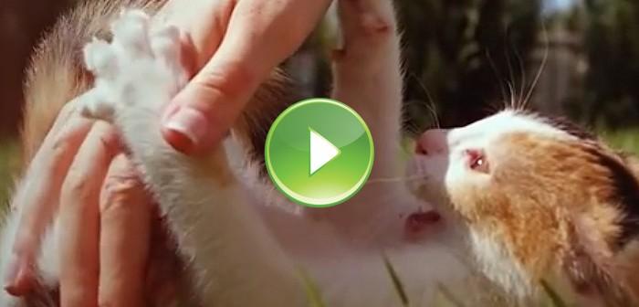 Gato grabado a cámara lenta