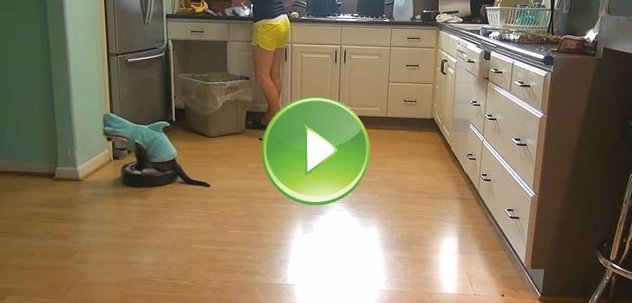 Gato encima de un robot Roomba