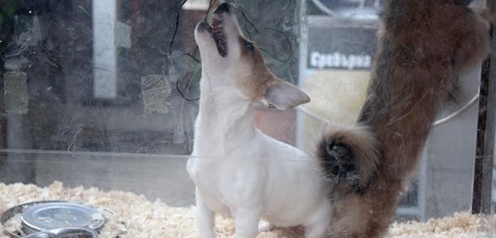 Perros en tienda de animales