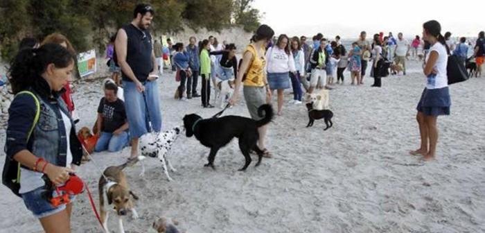 Toralla, playa para perros