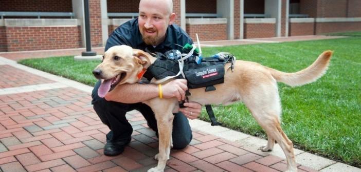 Arnés Cyber-Enhanced Working Dog