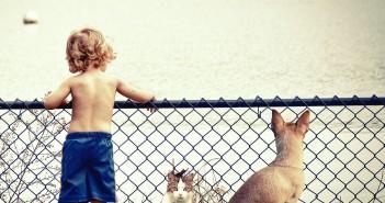 Convivencia niños y animales