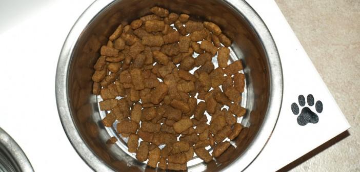 Bowl con comida de perro