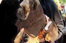 Perro disfrazado de Ewok