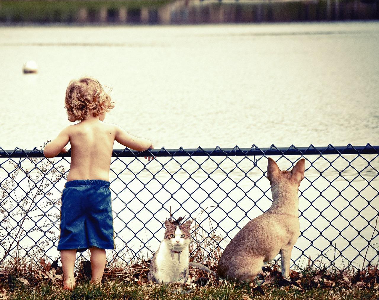 bebe-gato-perro