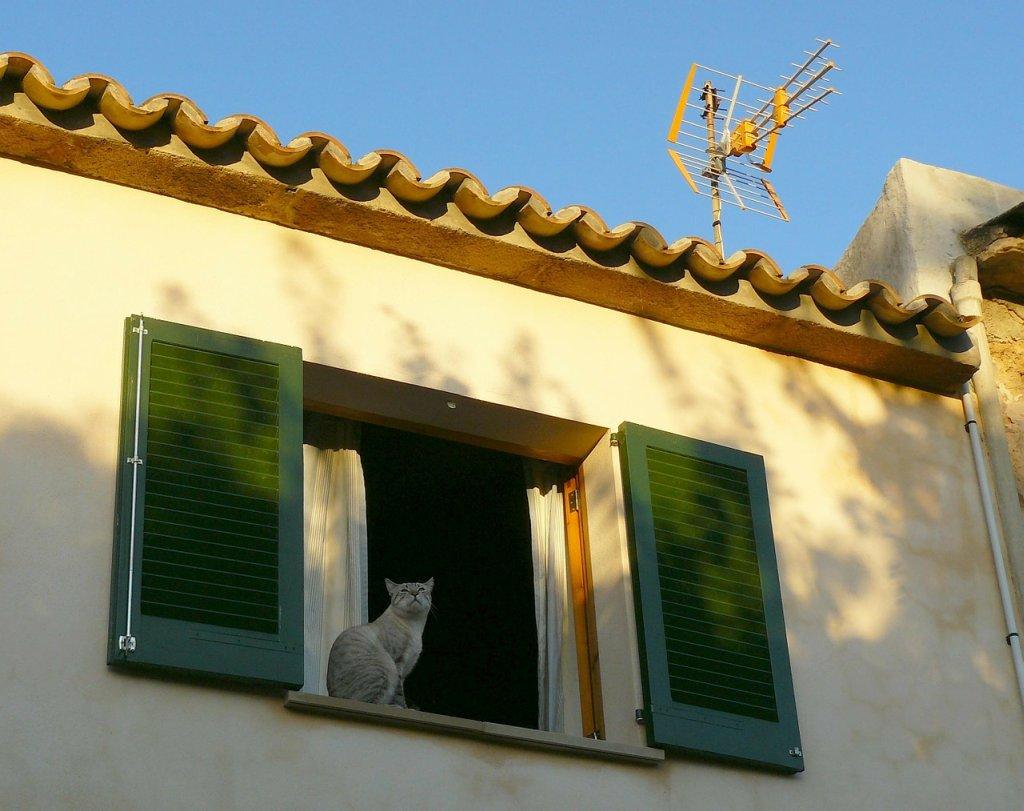 Un gato en la ventana