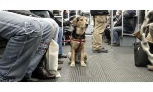 Perro metro