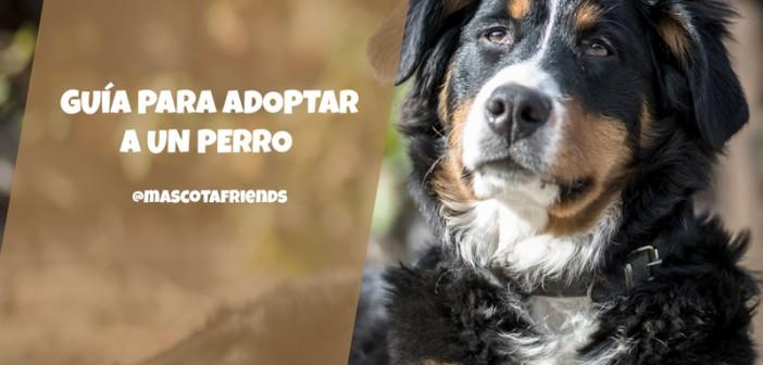 Guía para adoptar a un perro